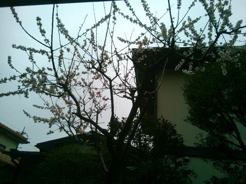 杏サマその1